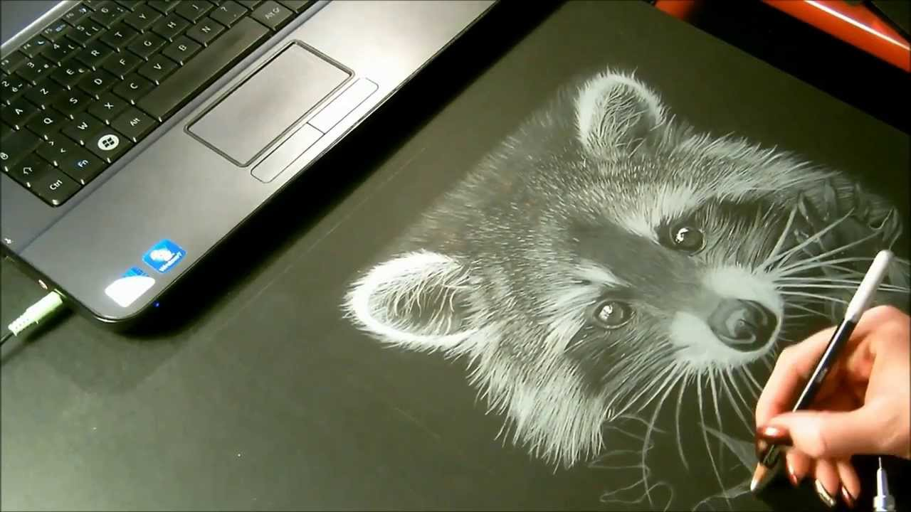 raccoon speed drawing  dessin  u0026quot raton laveur u0026quot  crayon blanc