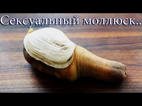 Топ 5 тварей в существование которых сложно поверить/сексуальный моллюск/Минога/Рыба-волк/Молох