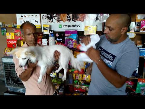 Pet Care - Dog Diaper - Bhola Shola