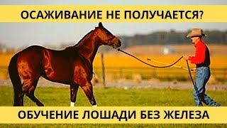 Видео-урок. Осаживание(Семинар «Домашняя лошадь от А до Я» http://loshad.mypro100mag.com/q/main Основные моменты при обучении лошади осаживать..., 2012-08-25T03:04:02.000Z)