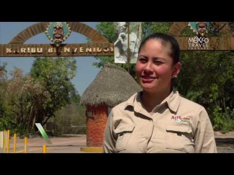 Tour al descubierto Safari