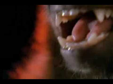 Monkey Shines Trailer