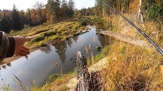 Рыбалка на Дикой лесной реке Щука на спиннинг в октябре