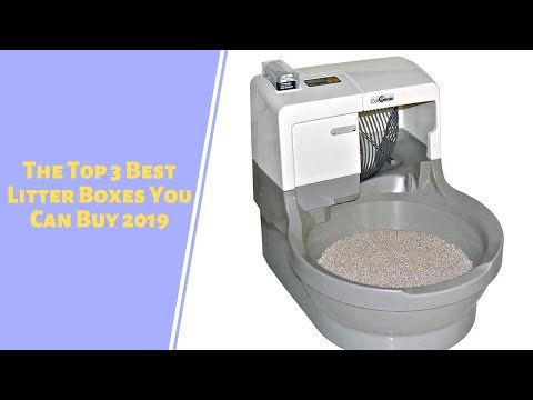 The Top 3 Best Litter Boxes You Can Buy 2019