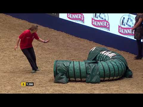 Kennel Club Small Dog Agility Finals at Olympia 2017