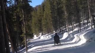 FreeWheel in the Snow
