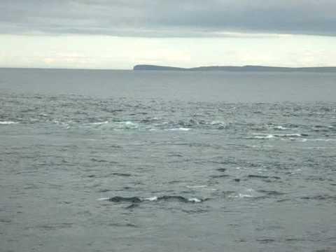 Pentland Firth Tidal Race
