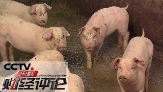 《央视财经评论》 20191123 生猪生产回暖!肉价能稳吗?  CCTV财经