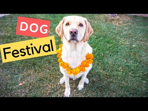 Dog Festival - Kukur Tihar with Zazu the Labrador
