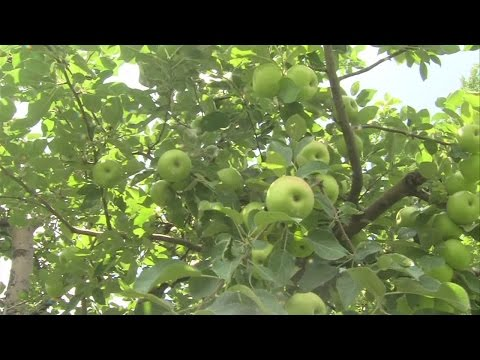 Tough spring for apple growers