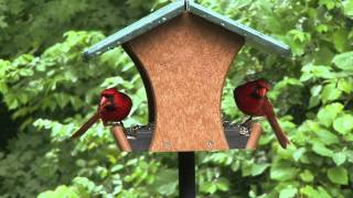 Wild Birds Unlimited - Ecotough® Classic Feeder