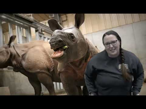 Zoo From Home :: Rhinos at Omaha's Henry Doorly Zoo and Aquarium