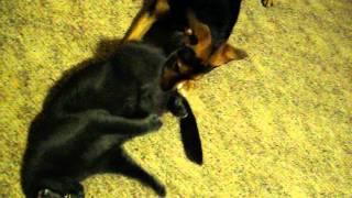 Dog Licking Cat Butt