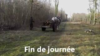 Traction animale: cheval au débardage l'hiver, cheval au maraîchage en saison
