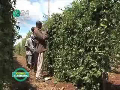 Kilimo Biashara: Passion Friut Farming