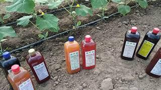 Выращивание огурца (био препораты). серия 4