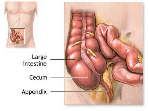 what side is your appendix on? symptoms, conditions, and, Human Body