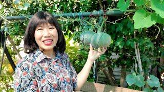 Vườn rau rộng lớn ở Mỹ: bông cải xanh, củ dền đỏ, trái hạnh nhân...