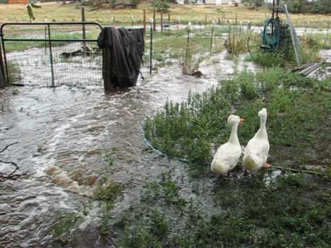 Farm Flood Mancos 10