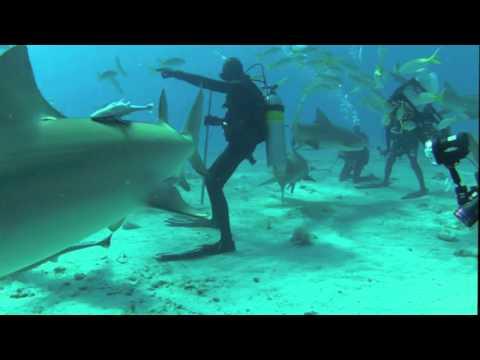 Sharks on Little Bahama Bank