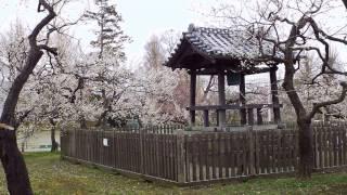 水戸の梅 弘道館公園 鹿島神社 品種名入り