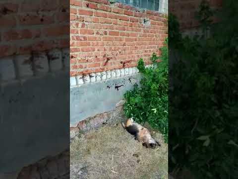 В Красном Куте полиция расследует зверское убийство дворовой собаки