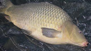 Первая суточная Рыбалка сезона 2021