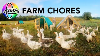 Surrounded by Ducks and Geese | 360 VR | Morning Chores on a Duck and Goose Farm