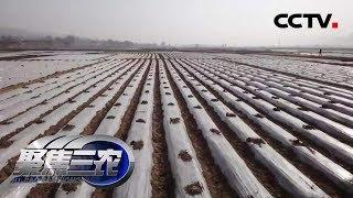 《聚焦三农》 20190829 莫让地膜垃圾成困局| CCTV农业