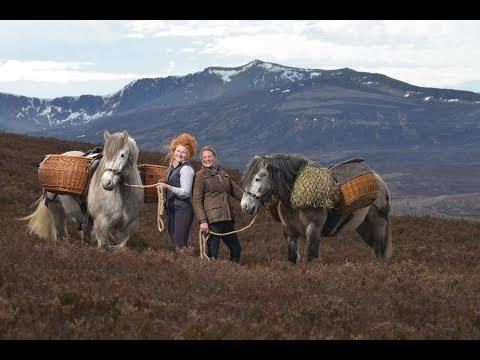 EQy magazine talks to Sylvia Ormiston of the Balmoral Highland Pony Stud