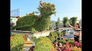 Gambar cover Thăm vườn kiểng thú lớn nhất Cần Thơ