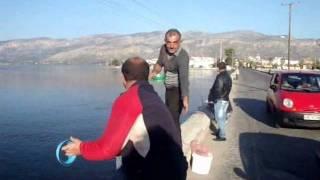ΑΙΤΩΛΙΚΟ - ψάρεμα στα γεφύρια - FISHING in GREECE-ETOLIKO.wmv