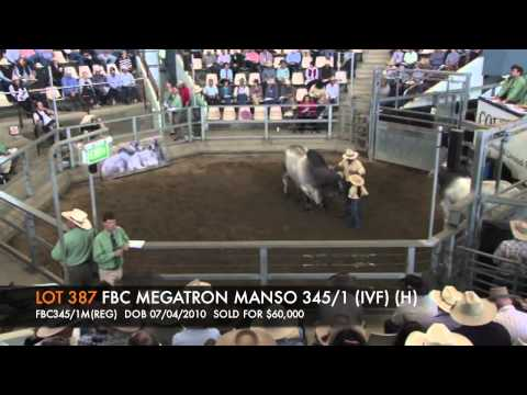 ROCKHAMPTON BRAHMAN WEEK 2012 - LOT387