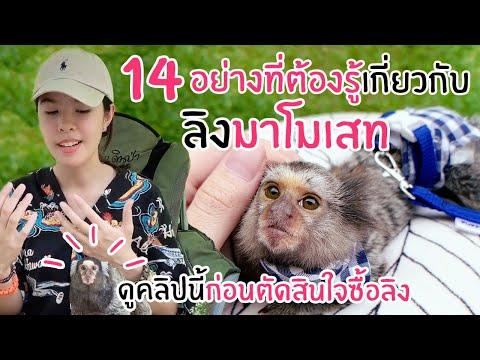14 อย่างที่ต้องรู้เกี่ยวกับ ลิงมาโมเสท !! ห้ามพลาด !!