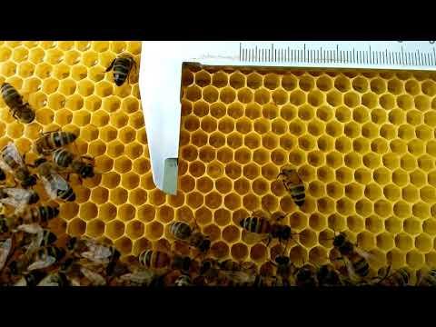 Как оттянули пчёлы вощину из под новой матрицы с ячейкой  5.6 мм