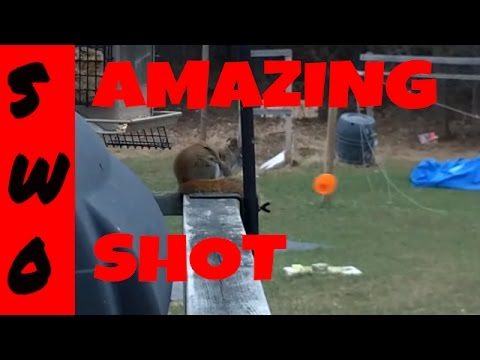Blowgun Red Squirrel Kill