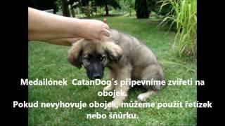 CatanDog´s - ochránce domácích mazlíčků