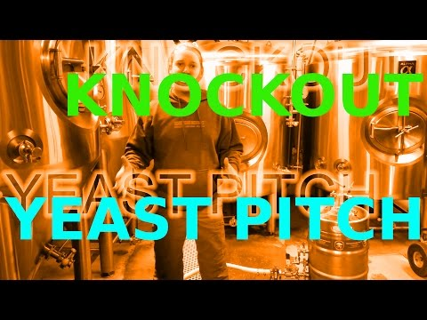 KNOCKOUT & YEAST PITCH!! How To: Microbrewery!