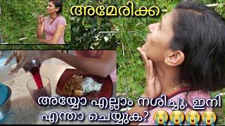 Malayalam vlog| malayalam breakfast |kerala breakfast recipe|kerala morning |malayalam morning food YouTube Videos