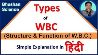 White Blood Cell (WBC or Leukocytes) | Function of WBC in hindi | Bhushan Science