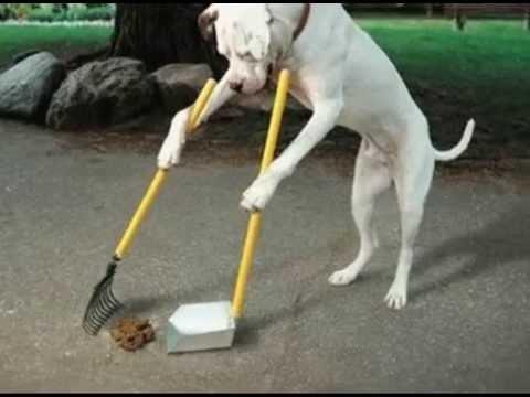 Een Hond Poep Ruimt