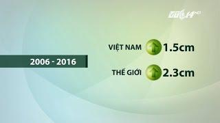 VTC14 | Sai lầm trong dinh dưỡng khiến người Việt chậm phát triển chiều cao