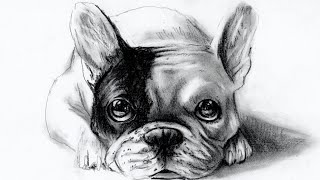 How To Draw Dog - Come Disegnare Un Cane (bulldog Francese/french Bulldog)