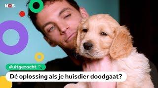 Kun je je huisdier klonen? (En is het een goed idee?) | UITGEZOCHT #8