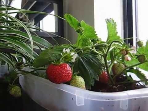 How to setup Indoor Condo Gardening Patio Gardening