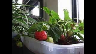 How to setup Indoor Condo Gardening - Patio Gardening