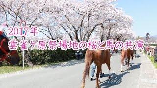 2017年 雲雀ケ原祭場地の桜と馬.