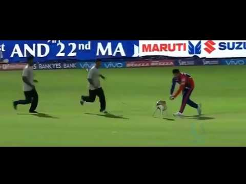 Funniest Animals Attacks on Players in Cricket History of All Time   Cricket Latest