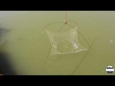 #1 Cefali Pescati Con La Tecnica Del Bilancino 1,5 X 1,5 - Pesca Col Bilancino - Fiume Brian Caorle