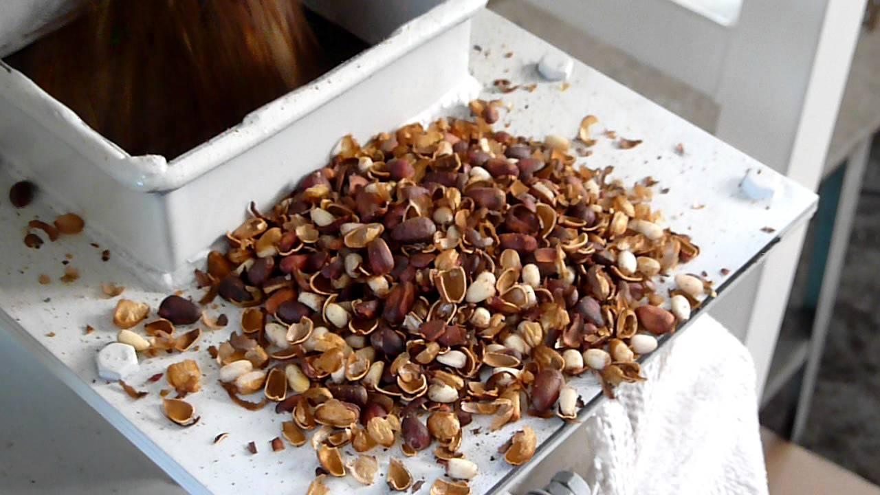 для Тюмени сколько стоит чищенный кадровый орех в улан-удэ паразиты